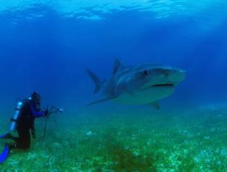 Haaien blijken opvallende functie te hebben: ze helpen de klimaatopwarming te vertragen