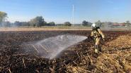Afgereden maïsveld afgebrand