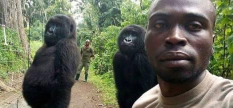 Hilarische gorillaselfie is allesbehalve 'gewone dag op kantoor'