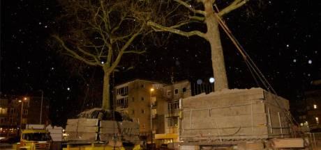 Vier platanen legden een spectaculaire reis af door de binnenstad, nu zijn er twee dood: 'Bomen zijn individuen'