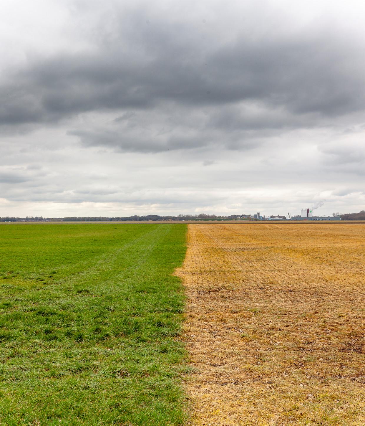 Landerijen in de Drentse Veenkoloniën, met rechts het land bespoten met glyfosaat.