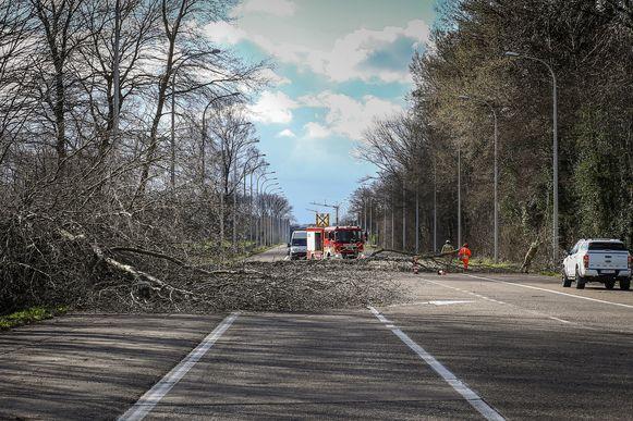Op de Steenweg tussen Herk-de-stad en Hasselt (Kermt) viel een boom over de volledige breedte van de weg. Het verkeer moest in beide richtingen omrijden