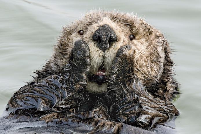 'Oh My!', roept de zeeotter.