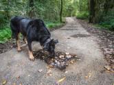 Oss haalt bronzen kunstwerk weer onder asfalt vandaan