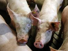 Varkensstal Poortvliet mag uitbreiden