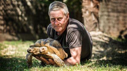 """Tweekoppige schildpad Kianga viert 8ste verjaardag: """"Ik krijg nog altijd vragen of ik haar niet verkoop, maar ik dénk er niet aan"""""""