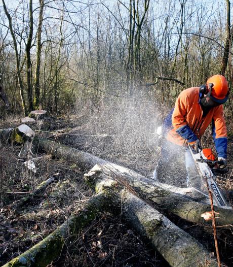 Kettingzaag haalt 2300 bomen neer in het Lingebos