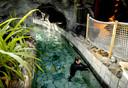 Geen toeristen biedt medewerkers de kans om onderhoud te plegen aan het zwembad van Center Parcs in Zeewolde.