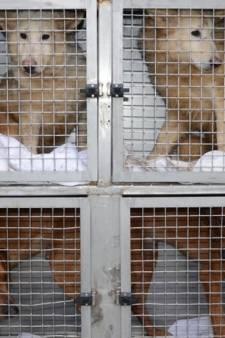 LIVE: Drie maanden voorwaardelijk en taakstraf van 180 uur voor hondenfokker uit Lettele