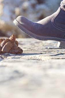 Nauwelijks boetes voor niet opruimen hondenpoep in Brabant, behalve in Waalwijk