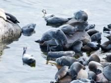 Près de 300 phoques retrouvés morts au bord de la mer Caspienne