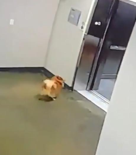 La laisse du chien reste coincée dans l'ascenseur: l'incroyable sauvetage