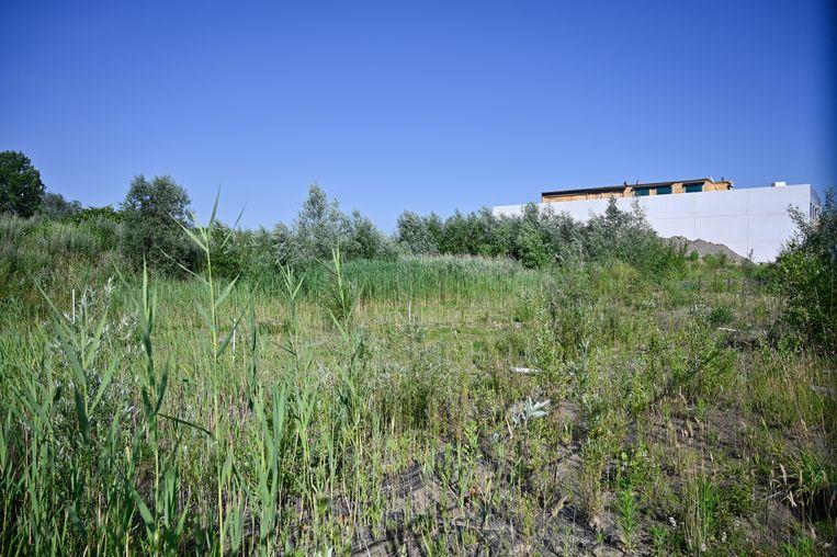 Het ziet er naar uit dat de site Van de Voorde nog niet meteen een nieuwe bestemming zal krijgen. Het terrein ligt al jaren braak en raakt overwoekerd.