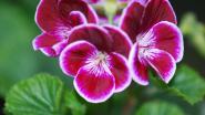 Voordracht rond planten en bloemen op 6 maart