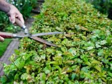 Zutphen vraagt inwoners mee te helpen met maaien, snoeien en opruimen groenafval in de buurt