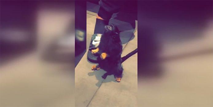 Le singe, en bonne santé, est actuellement gardé en quarantaine