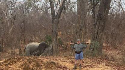Jager poseert trots met doodgeschoten olifant in Zimbabwe