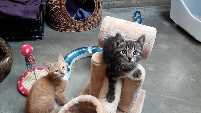 Kittens in de speelkamer van De Hof van Ede.