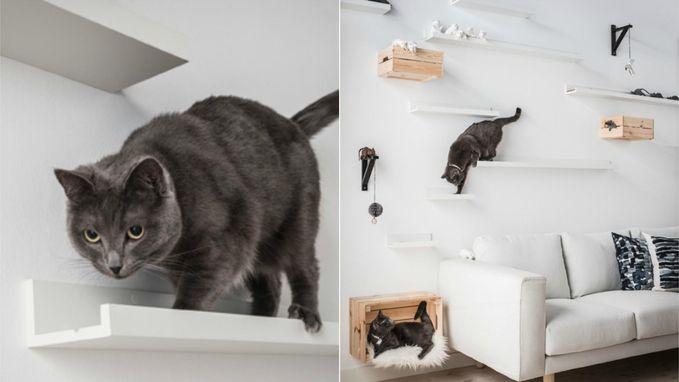 DIY kattenparadijs: creatief met schilderijplanken van Ikea