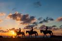 Formentera heeft een ruitersportcentrum waar je een paard kunt huren.