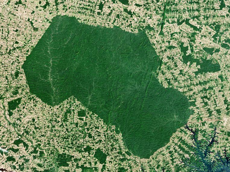 In de wijde omgeving van het (groene) leefgebied van het inheemse Parakanã-volk, in de Amazone, is bijna geen boom meer te vinden.  Beeld Getty Images