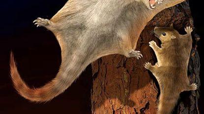De vliegende eekhoorn