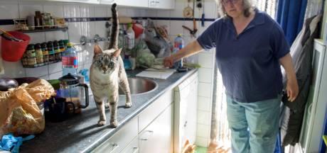 Tien kattenlijkjes in Bonifaciuspark Eindhoven