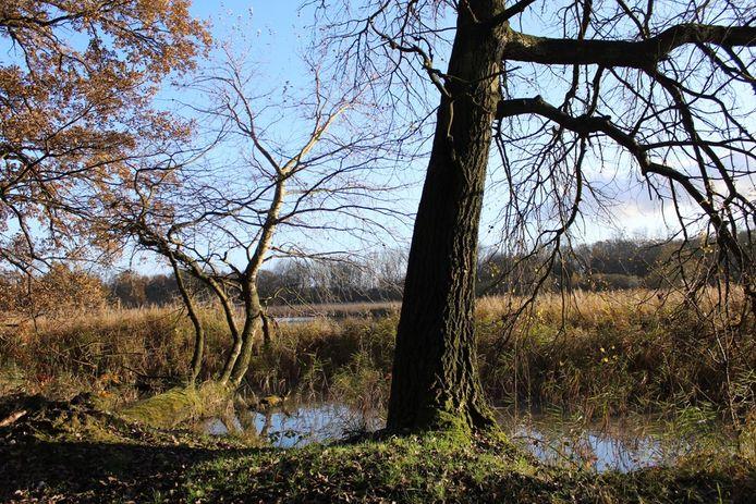 Natuurreservaat het Torfbroek in Kampenhout.