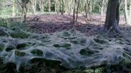 Spinselmot zorgt voor sprookjesachtig decor