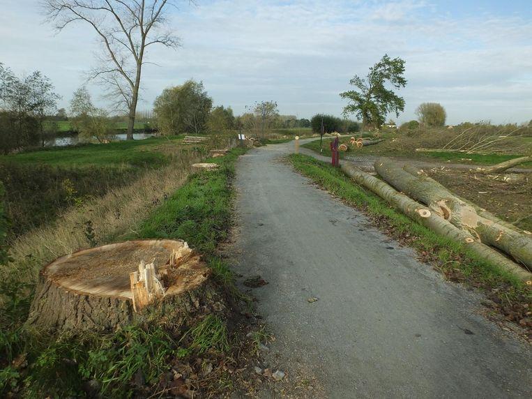 De bomen op de Maaigemdijk langs de Oude Leiearm werden gerooid. De bomen aan de oever staan er nog.