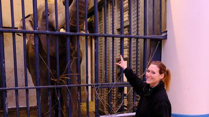 Iets voor jou? Zoo en Planckendael zoeken 'olifantenfluisteraar'