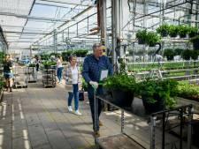 Kwekerij Linthorst in Diepenheim zet de bloemetjes buiten, óók tijdens de coronacrisis