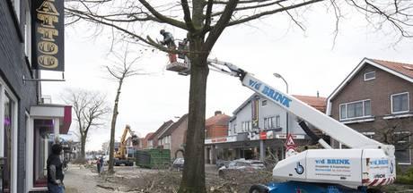 Moeraseiken gekapt op Patrimoniumlaan Veenendaal