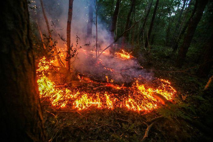 Bosbrandje bij Berkendonk in Helmond