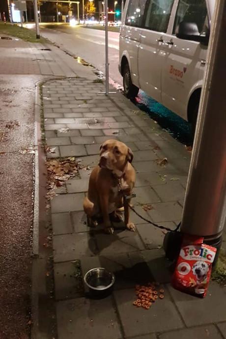 Dierenasiel Tilburg geeft vastgebonden hond terug aan baasje: 'Ze zullen naar eer en geweten gehandeld hebben'