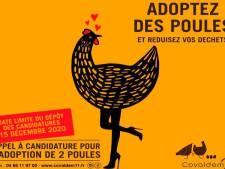 """""""Adoptez des poules"""": une affiche """"inadmissible"""" retirée après un mouvement de colère"""