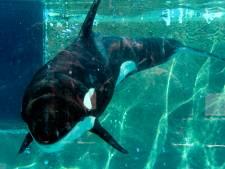 10 jaar later: hoe is het nu met orka Morgan?