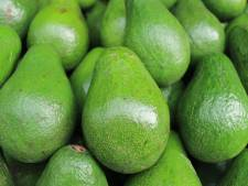 75 kilo cocaïne verstopt in container vol avocado's