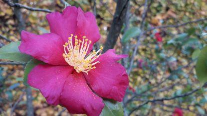 Expo focust op 'roos zonder doornen'