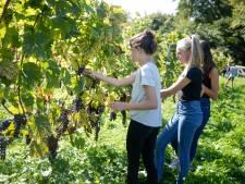 Leerlingen verruilen leslokaal voor wijngaard