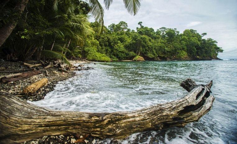 The Island: geen spellen, geen afvallers, geen eliminaties. Beeld NET5
