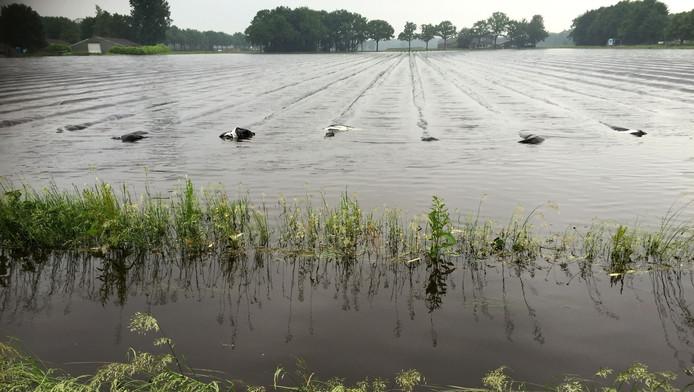 Overstroomde aspergevelden in Leende.
