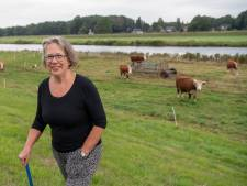 Hereford-koe als entree van Dalfsen
