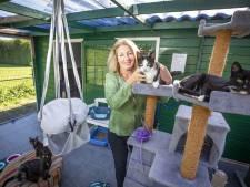 Dierenopvangcentrum Oldenzaal vangt na noodgedwongen sluiting weer dieren op