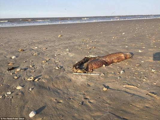 De onfortuinlijke vis spoelde aan op een stadsstrand in Texas.