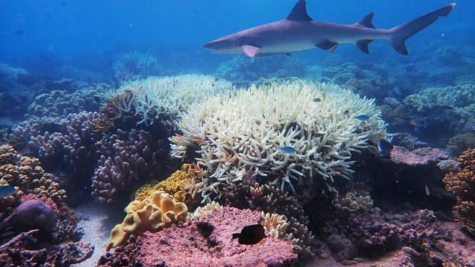 Helft koralen in Great Barrier Reef verdwenen