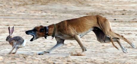 Politie neemt honden van wildstropers in beslag