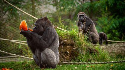 Het gaat niet goed met de Antwerpse Zoo: dierentuin hoopt nu op heropening in juni