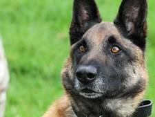Legerhond Mali krijgt hoogste eremedaille voor strijd tegen Taliban
