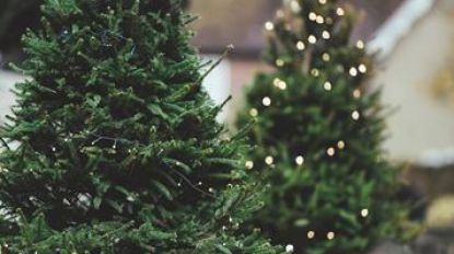 Kerstboominzameling aan De Oase